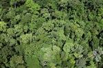 Borneo rainforest -- sabah_2352