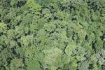 Borneo rain forest -- sabah_2353