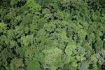 Borneo rainforest in Malaysia -- sabah_2354