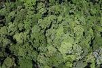 Borneo rainforest in Sabah -- sabah_2355