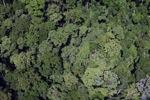 Borneo forest -- sabah_2356