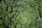 Rainforest in Borneo -- sabah_2357