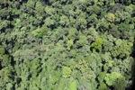 Rainforest in Malaysian Borneo -- sabah_2361