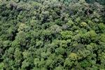 Rain forest in Malaysian Borneo -- sabah_2362