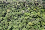 Jungle in Malaysian Borneo -- sabah_2363