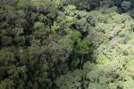 Malaysian Borneo forest -- sabah_2367