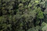 Forest in Sabah -- sabah_2369