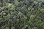 Forest in Sabah, Malaysia -- sabah_2370