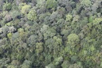 Rainforest in Borneo -- sabah_2372
