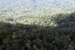 Rain forest in Borneo -- sabah_2373