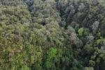 Lowland rainforest Malaysian Borneo