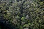 Rainforest in Malaysian Borneo -- sabah_2376