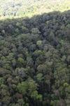 Rain forest in Malaysian Borneo -- sabah_2377