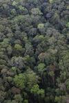 Jungle in Malaysian Borneo -- sabah_2378