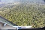 Malaysian Borneo forest -- sabah_2382