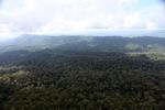 Forest in Sabah -- sabah_2384