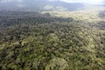 Primary lowland rainforest in Borneo