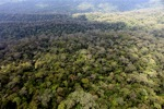 Primary lowland forest in Borneo