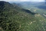 Oil palm estate -- sabah_2391