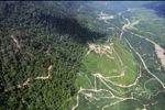 Oil palm plantation -- sabah_2393