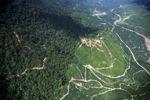 Oil palm plantation -- sabah_2395