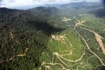 Oil palm plantation -- sabah_2396