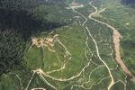 Oil palm plantation -- sabah_2398