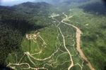 Oil palm plantation -- sabah_2399