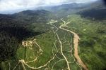 Oil palm plantation -- sabah_2400