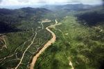 Oil palm plantation -- sabah_2403