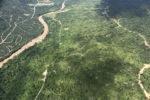 Oil palm plantation -- sabah_2405