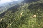 Oil palm plantation -- sabah_2406
