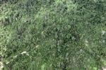 Deforestation in Borneo -- sabah_2412