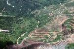 Deforestation in Borneo -- sabah_2420