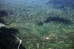Oil palm plantation -- sabah_2423