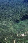 Oil palm plantation -- sabah_2424