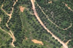 Oil palm plantation -- sabah_2425