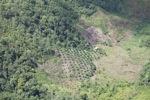 Deforestation in Borneo -- sabah_2428