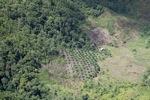 Deforestation in Borneo -- sabah_2429