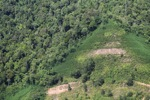 Deforestation in Borneo -- sabah_2430