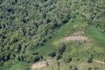 Deforestation in Borneo -- sabah_2431