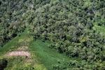 Deforestation in Borneo -- sabah_2435