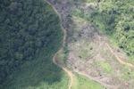 Deforestation in Borneo -- sabah_2436