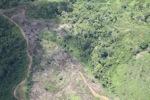 Deforestation in Borneo -- sabah_2437