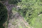 Deforestation in Borneo -- sabah_2438