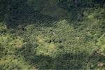 Deforestation in Borneo -- sabah_2439