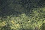 Deforestation in Borneo -- sabah_2440