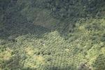 Deforestation in Borneo -- sabah_2441