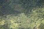 Deforestation in Borneo -- sabah_2442