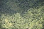 Deforestation in Borneo -- sabah_2443